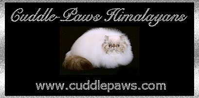 Cuddle-Paws Himalayans