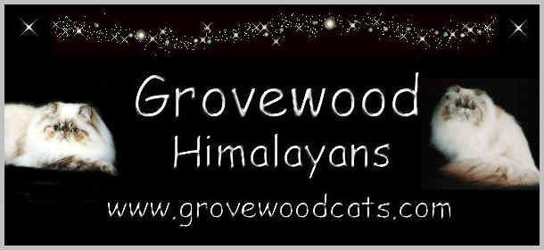 Grovewood Himalayans