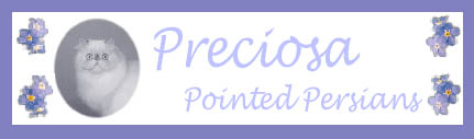 Preciosa Pointed Persians